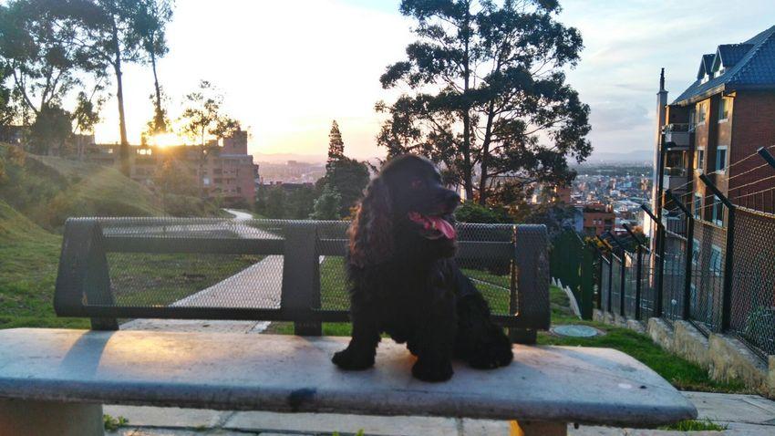 Capture The Moment Ringo Bogota,colombia. CerrosOrientales Paseoconringo Casual Style