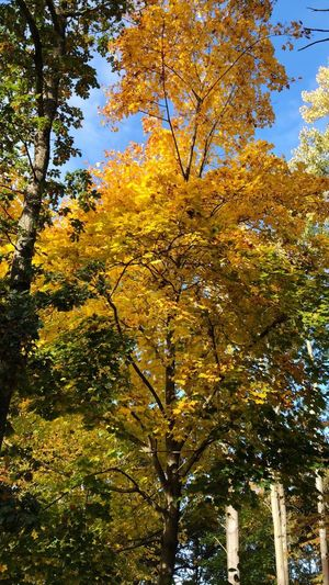 Plant Tree Autumn Growth Change Beauty In Nature Low Angle View