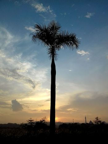 Sunrise Silhouette Palm Tree Cloud - Sky Beauty In Nature Landscape Tree Samsung Galaxy J3 (6)