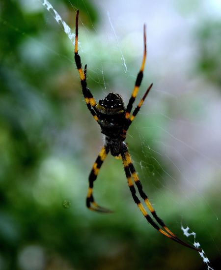 Spider Spider Web One Animal Animal Themes Animal Leg Animals In The Wild Animal Wildlife Nature Web Focus On Foreground Close-up Outdoors No People Day