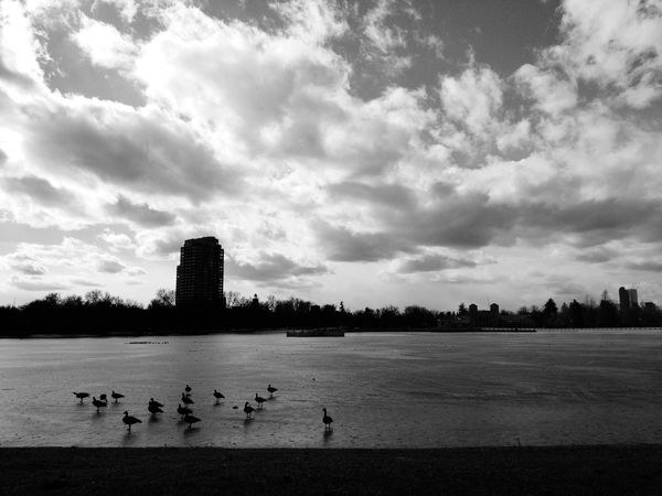Geese On Frozen Lake Frozen Lake Geese Migration Winter Adapted To The City The City Light The Great Outdoors - 2017 EyeEm Awards