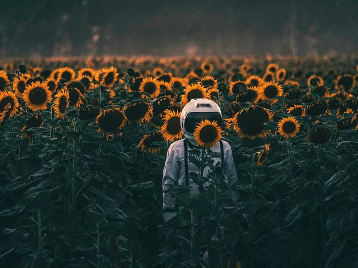 Astronaut Standing Amidst Sunflowers Blooming On Field