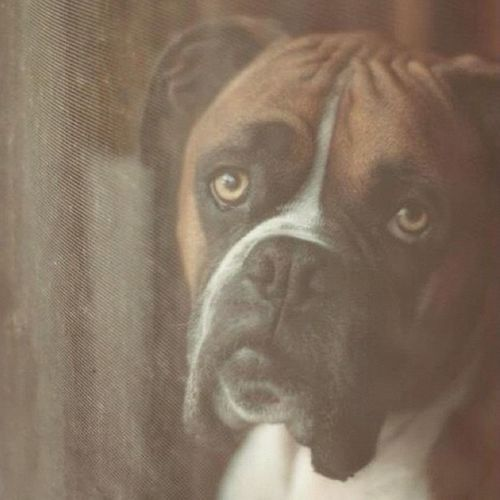 The Beautiful Pete  captured through a Screen Door
