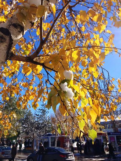 GM 🙆 Tree City Low Angle View Outdoors Yellow Built Structure Building Exterior Nature Branch Beauty In Nature No People Architecture Day Sky Mixer Weekend November 2016 EyeEm Gallery Eyeemphotography Howabeautiful Looking At Camera Dontworry Be Happy
