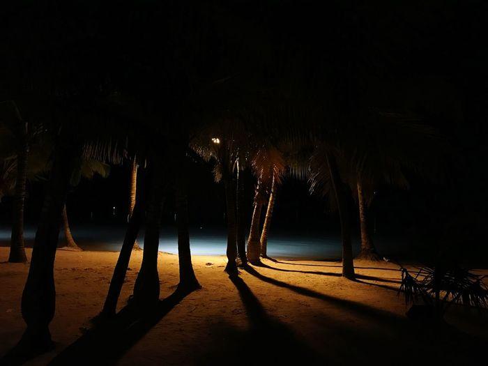 Tree Plant Nature Night Sky Shadow Land Beach No People Water First Eyeem Photo My Best Photo