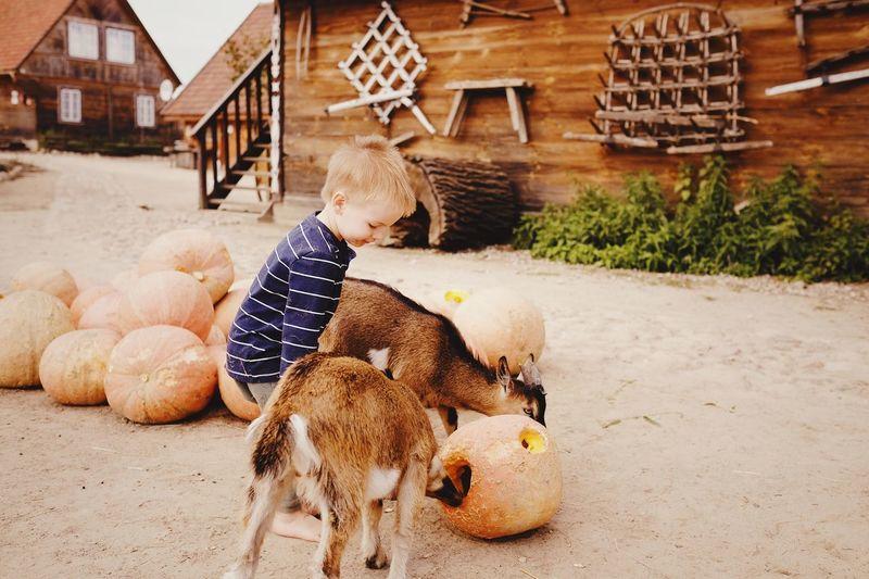 Boy EyeEm Selects Animal Themes Animal Mammal Domestic Animals Vertebrate Domestic Nature