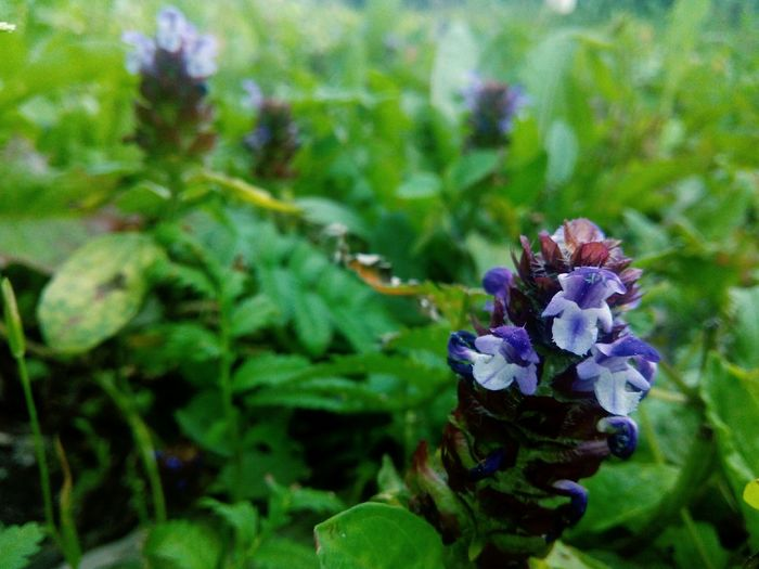 Flower Plant Nature Purple No People Green Color Leaf Day Outdoors Close-up Beauty In Nature Growth Fragility Flower Head Freshness