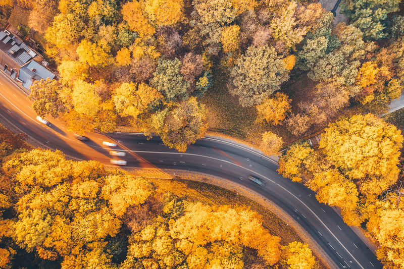 Golden autumn Golden Autumn Golden Autumn Trees Golden Autumn Leaves Europe Lietuva Mavic 2 Mavic 2 Pro Drone  Aerial Aerial View Aerial Photography Street Road Sunset Cars Autumn Change Tree Plant Nature Transportation Orange Color Day No People Beauty In Nature Yellow Architecture High Angle View Outdoors Growth Built Structure Mode Of Transportation Scenics - Nature Sunlight Autumn Collection My Best Photo