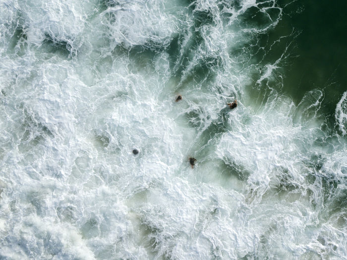 High angle view of birds in sea