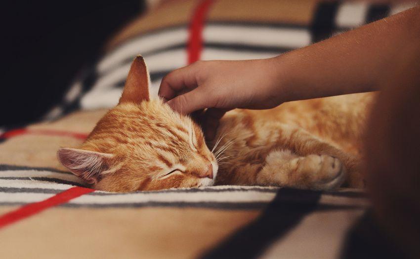 Cat lying on hand