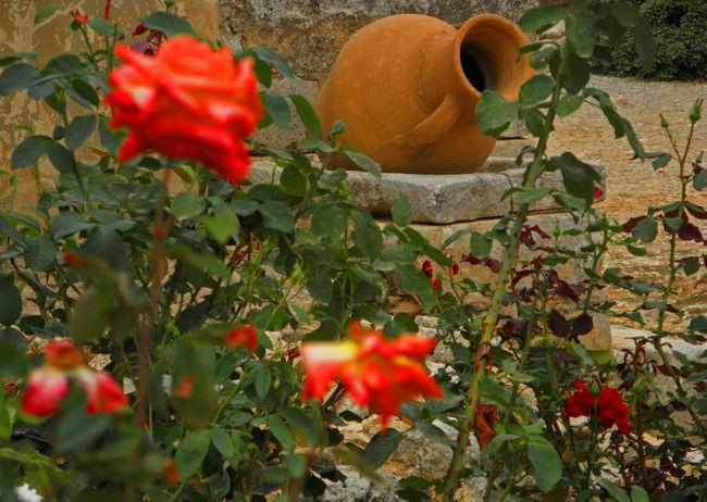 Blooming Botany Flower Fragility Growth Leaf Nature Plant Red Vase