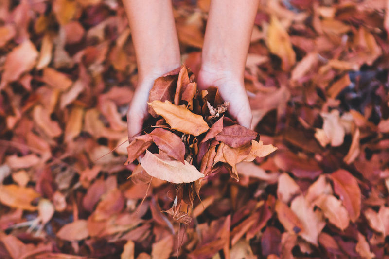 Goodbye autumn.🍁🍂 hello winter.🎄⛄❄ Autumn Autumn Collection Autumn Colors Autumn Leaves Autumn Autumn🍁🍁🍁 Beauty In Nature Change Close-up Day Dry Fragility Hand Handmade Handsome Human Body Part Human Hand Leaf Lifestyles Low Section Nature One Person Outdoors People Real People