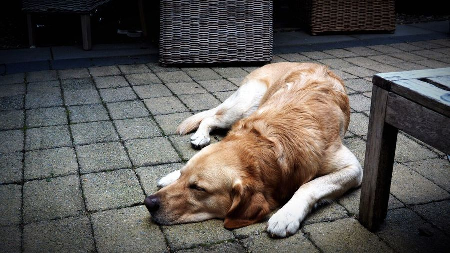 Dog Sleeping On Footpath