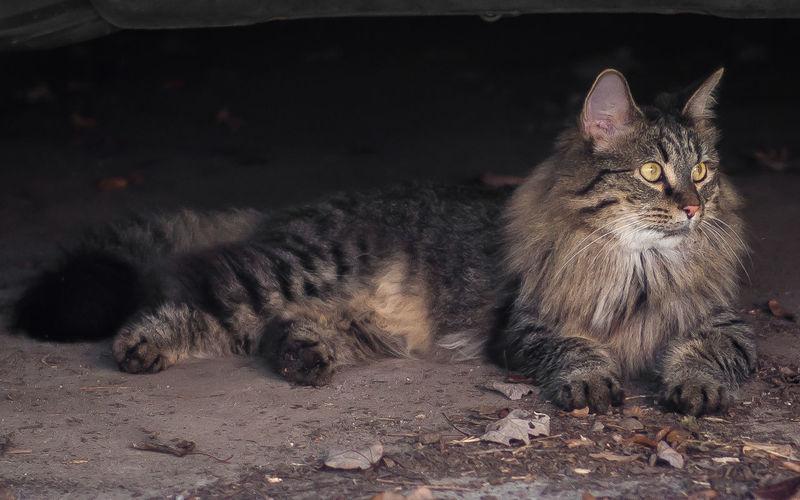 Cat resting on floor