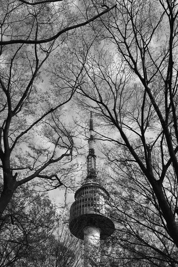 Seoul Tower Tree Bare Tree Architecture Built Structure Building Exterior Tower Low Angle View Plant Branch Nature No People Tall - High Sky Tourism Travel Destinations Building Day Outdoors Spire  Travel Skyscraper Seoul Tower Blackandwhite