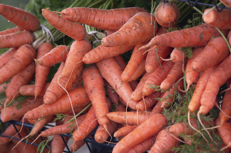 Root Vegetable