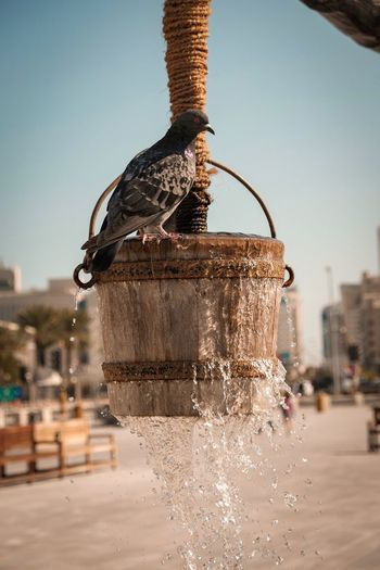 Well at Souq Waqif, Doha Bird Well  Dove Qatar Doha Middle East Cultures Corniche Culture Focus On Foreground Architecture Sky Day Animal Nature Vertebrate Water Animal Wildlife Animals In The Wild Animal Themes Bird Clear Sky No People City Food And Drink Outdoors Close-up Built Structure