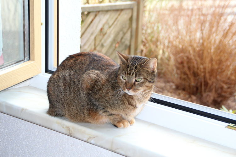 cat lilly at the window Alertness Animal Animal Themes At The Window Cat Domestic Cat Feline Home One Animal Pets Portrait Relaxation