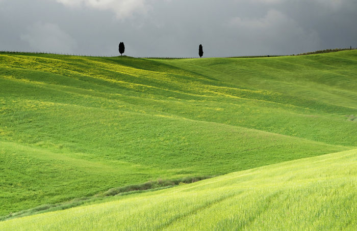 Agriculture Hills Tuskany Agriculture Beauty In Nature Cloud - Sky Cloudy Stormy Cypress Trees  Day Environment Field Grass Green Color Idyllic Land Landscape Nature No People Non-urban Scene Outdoors Plant Scenics - Nature Sky Tranquil Scene Tranquility
