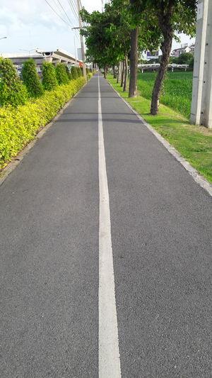 Street for Bicycle ,Walk way ,tree ,line