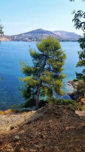 Aegean Sea Leros Leros Island Greece GREECE ♥♥ Greece Photos Pine Tree Pine Blue Blue Sky Blue Ocean Blue Sky Water Tree Pixelated Blue Sky Close-up Horizon Over Water Ocean Seascape Rocky Coastline Beach Sea Calm Tranquil Scene Tranquility Remote Idyllic Scenics Countryside