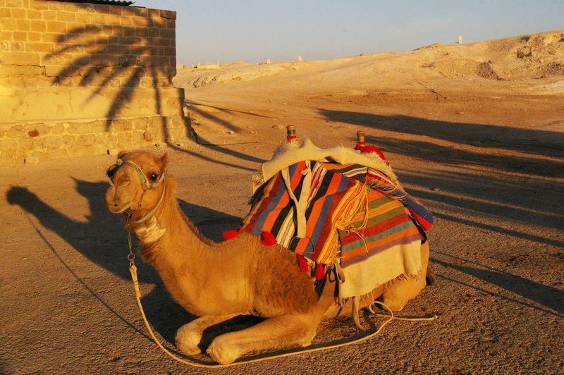 Horse cart in a desert