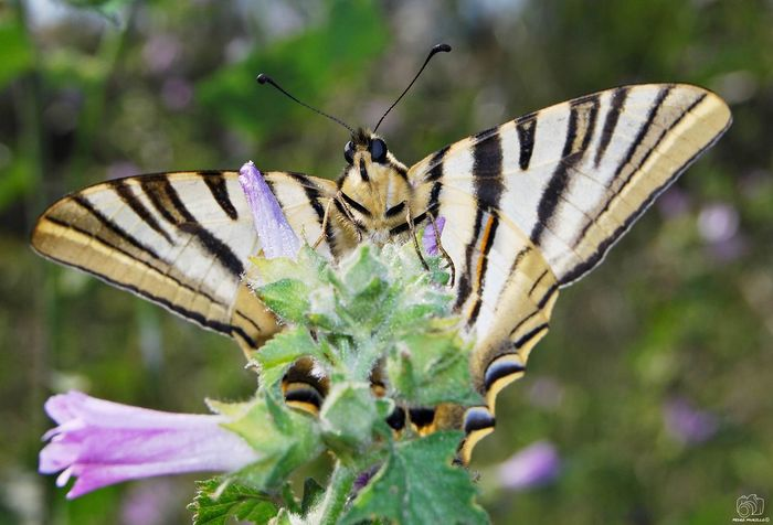 Animal Animals Looking At Camera Nature Forest City Sun Perching Plant Flower Spread Wings Perching Flower Full Length Butterfly - Insect Insect Leaf Animal Wing Close-up Animal Themes Moth Butterfly Pollination Animal Antenna Animal Markings Feeding  Zinnia  Thistle Symbiotic Relationship Lantana