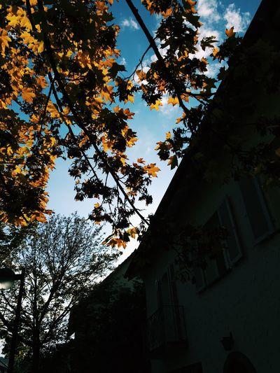 😍😌😊 Tree Low