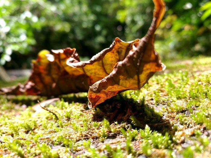 "Beautiful Nature Hello World Happy 🍃 "" Fantasy world """