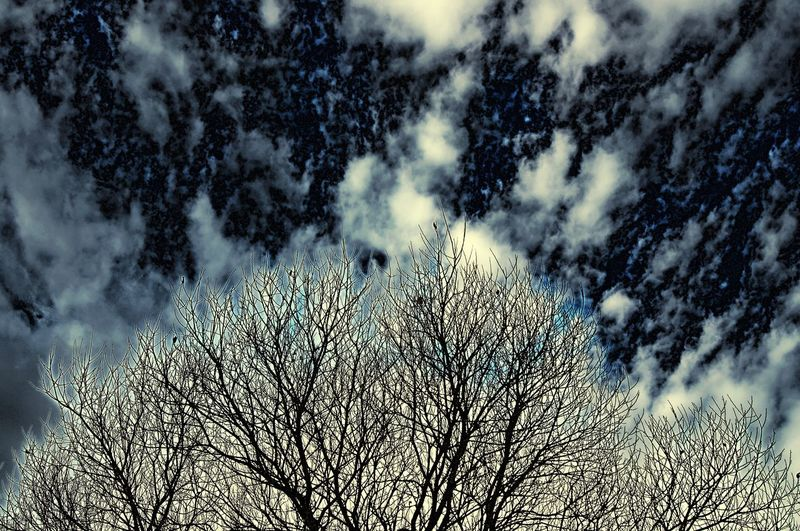 A space tree or tree in space. Tree Bare Tree Low Angle View Nature No People Winter Branch Beauty In Nature Popular Photos Exceptional Photographs See The World Through My Eyes EyeEmBestPics EyeEm Best Shots EyeEmNewHere Art Is Everywhere Eyeem Market Outerspace Space