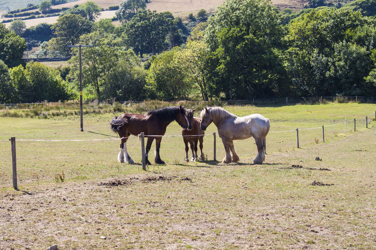 Conspiring Lake District Animal Animal Themes Animal Wildlife Day Domestic Domestic Animals Field Grass Group Of Animals Herbivorous Horse Land Landscape Livestock Mammal Nature No People Paddock Pets Plant Ranch Shire Horses Tree Vertebrate