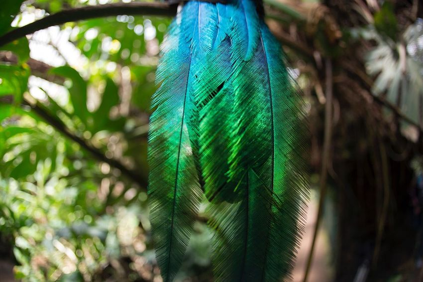 Feather  Bird Animals In The Wild Nature Quetzal Beauty Green Color Beauty In Nature