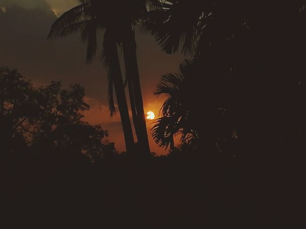 Honor6x Tree Nature Outdoors No People Coconut Trees Sunset