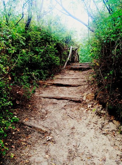 Steps Forest