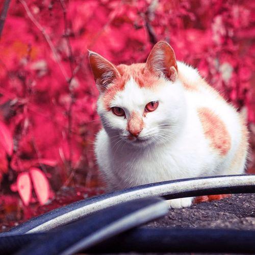 Portrait of cat sitting on car