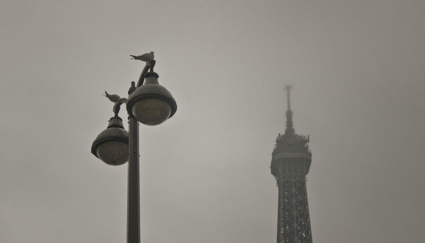Architecture Birds Built Structure City Day Eifel Tower Fog Low Angle View No People Paris, France  Pigeons Sky Streetphotography Tower Travel Travel Destinations Travel Photography travel