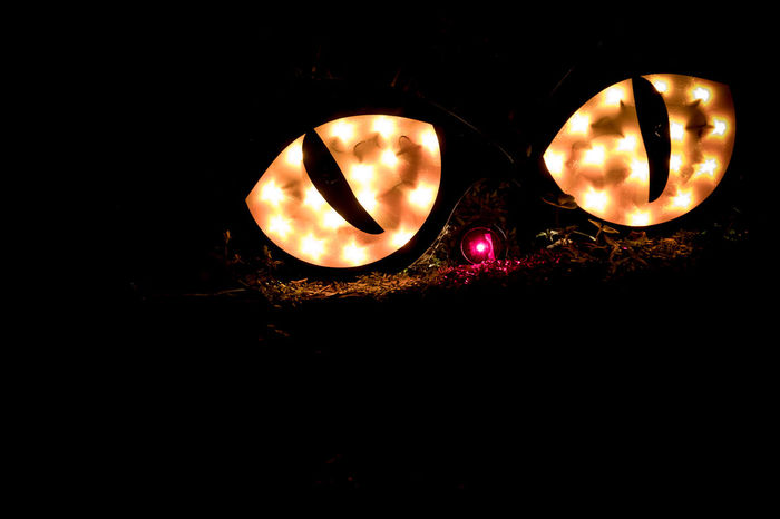 Giant Halloween Cats Eyes Garden Decoration Celebration Dark Garden Decoration Halloween Inflatables Nighttime USA Cat Cats Eyes Close-up Decoration Decorations Eyes Hallows Eve Illuminated Jack O Lantern Night No People Outdoors Tennessee United States Of America