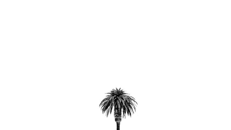 Lonely palm beach that loves to people watch 😉 Palm Tree Lonely Tree Lonely Palm Tree Solitary Moments Solitary Black And White Photography Bkack And White Tree Cellphone Photography Perspective Photography Standing Alone Stand Tall Stand Strong EyeEm Best Shots Newest Talent New Talents Best Photos Somergefühle The Week Of Eyeem