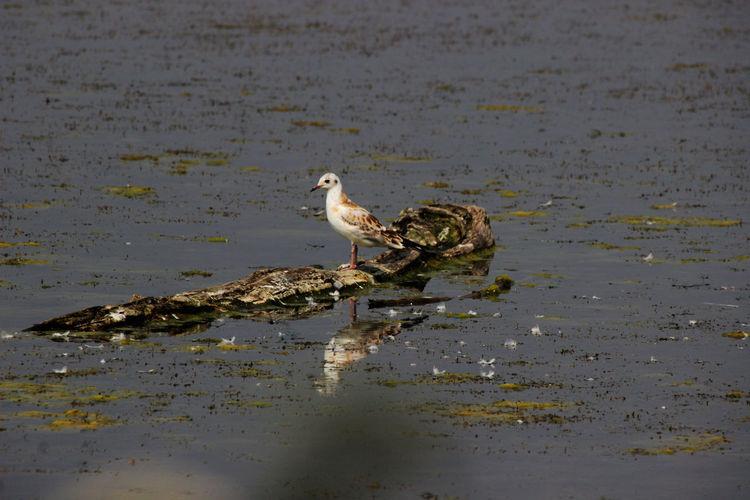 Moving around Rome Animal Animal Themes Animal Wildlife Animals In The Wild Bird Gull Water
