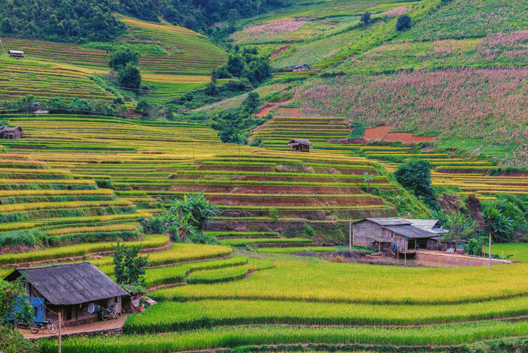 Beautiful landscape view of rice terrace and small tent Landscape Rural Scene Scenics - Nature Land Environment Field Farm Plant Agriculture Beauty In Nature Tranquil Scene Tranquility Growth Built Structure Rice Paddy Rice - Cereal Plant Terrace Crop  Nature Architecture No People Outdoors Plantation Cottage Vietnam Mu Cang Chai Nature Rice Paddy Rice Field Landscape_photography Tent Hut