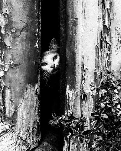 Portrait of cat peeking through tree trunk