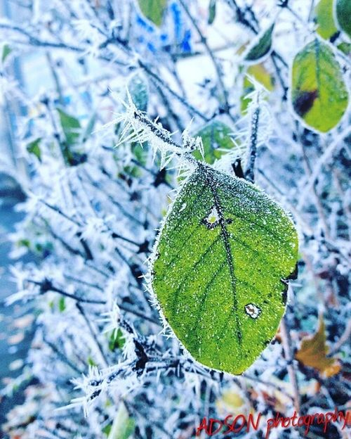 Snow Snow ❄ Nature Leaf Close-up Focus On Foreground ADSON....📷❤ ADSONphotography AMMAR ADSON ماضي Holiday - Event Tree Christmas Tree Midnight Beauty In Nature Outdoors Day Green Color No People Sky Architecture Building Exterior Land Vehicle Cold Temperature ورد