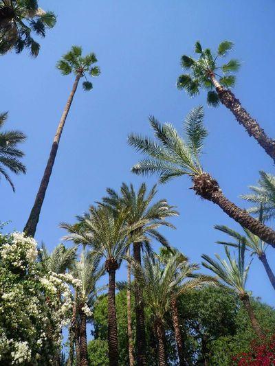 Botanical Garden Majorelle No Edit/no Filter Morocco Marrakech Palm Trees