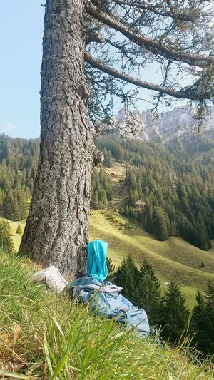 Tree No People Outdoors Nature Grass Landscape Alpen Tranquil Scene Last Days Of Summer Reading Green Book In Nature