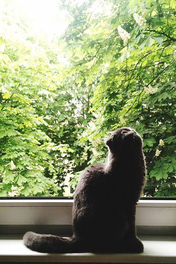 Close-up of cat sitting on window sill
