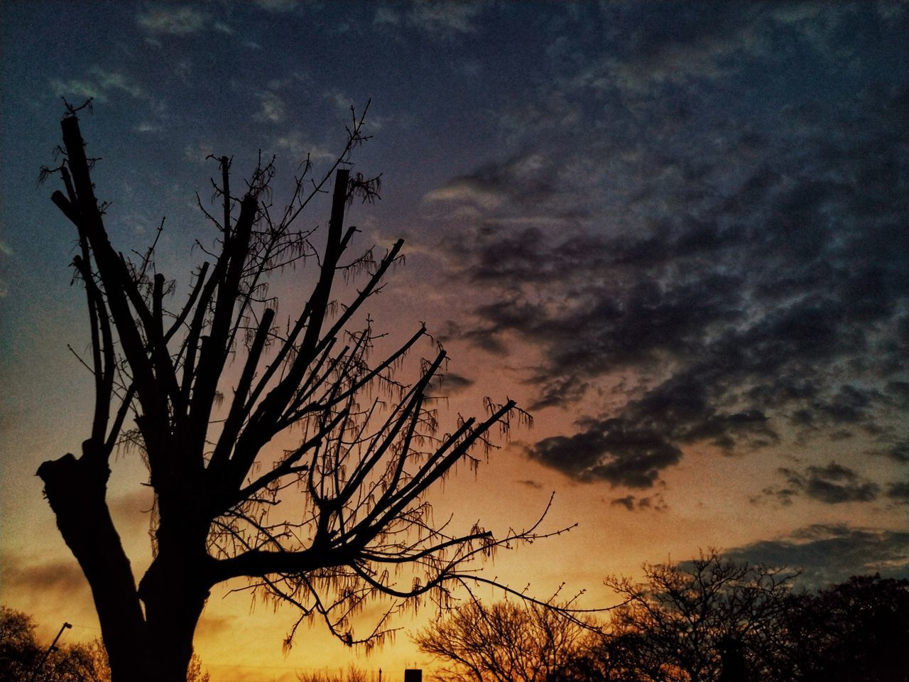 SILHOUETTE BARE TREE AGAINST DRAMATIC SKY
