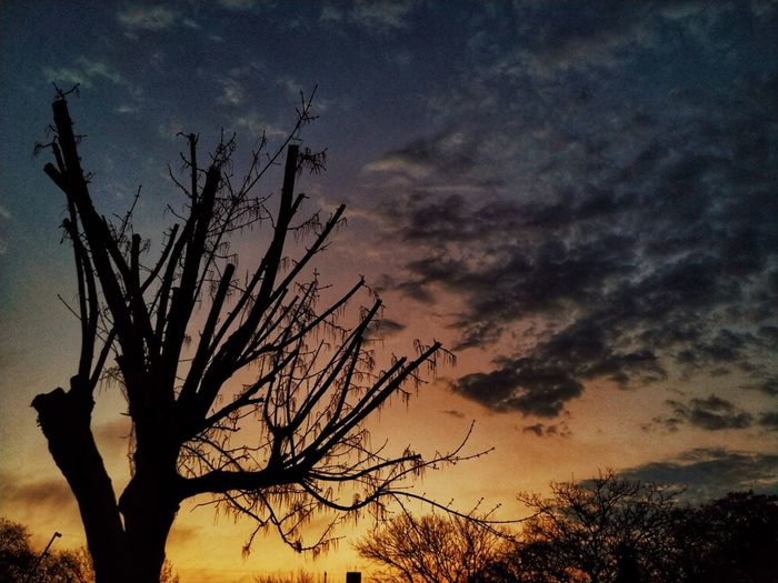 Low angle view of silhouette bare tree against dramatic sky