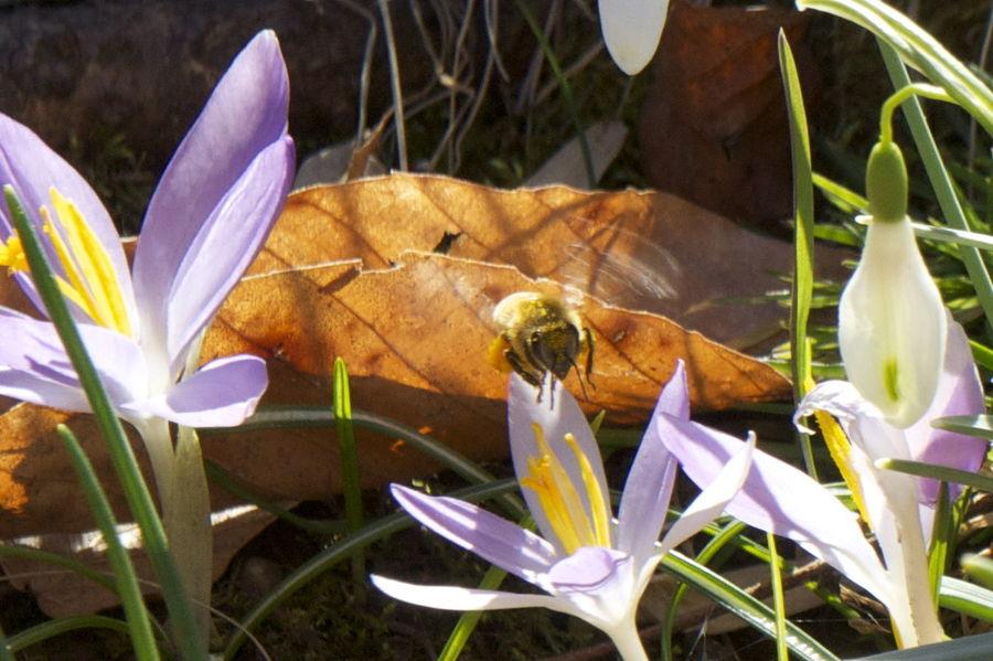 Flowers Bees Spring Flowers