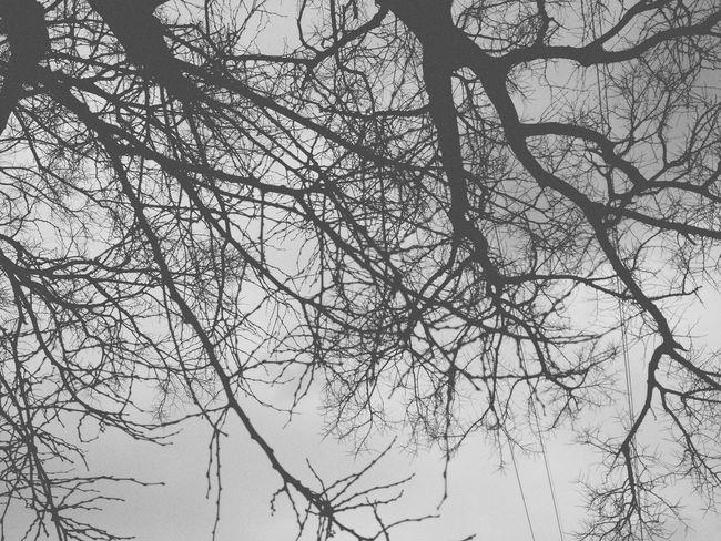 우중충 Gloomy Sunday Tree No Leaves