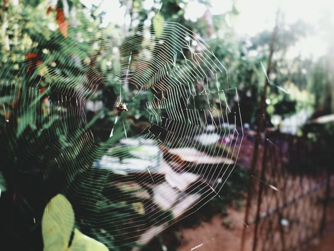 Focus On Foreground Spider Web Close-up Web Trapped Day Nature No People Animal Themes FragilityEyeEm Selects Spider Green Eeeeeeeeer Outdoors